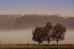 Misty morning meaddow. In the autumn royalty free stock photo