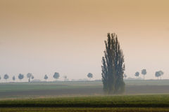 Misty morning meaddow. In the autumn royalty free stock photos