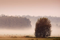Misty morning meaddow. In the autumn Stock Image