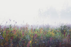 Misty Morning In The Meadow stock photography