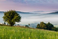 Misty morning. In the mountains stock photo