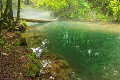Misty morning and misty river in Beusnita National Park,Romania Stock Image