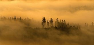 Fog in a mountain forest stock image