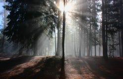 Misty Morning nahe Crane Prairie Lizenzfreie Stockfotos