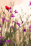 Misty morning in nature with wild flowers violet and red Stock Image