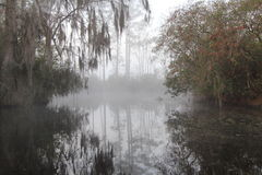 Misty Morning - Okefenokee Swamp Royalty Free Stock Image