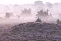 Misty morning over hills with heather Stock Images
