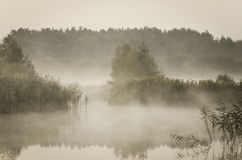 Misty morning over the lake Stock Images