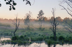 Misty morning  over pond Royalty Free Stock Photos