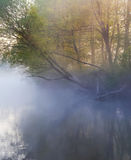 Misty morning over the river Royalty Free Stock Image