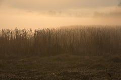 Misty morning on the overgrown lake. Misty morning on the overgrown country lake stock photo