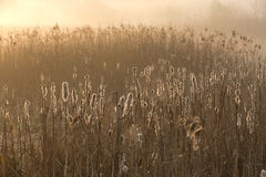 Misty morning on the overgrown lake. Misty morning on the overgrown country lake Royalty Free Stock Image