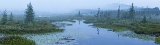 Misty Morning på brunts områdesöppning Arkivfoto