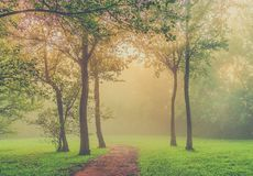 Misty morning in the park Stock Image
