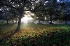 Misty morning at Ravenhill Park Royalty Free Stock Image