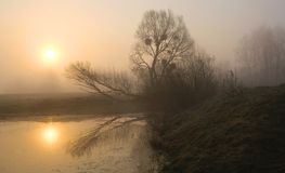 Misty morning on the river. Dawn.  stock photos