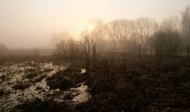 Misty morning on the river. Dawn.  stock photography