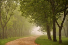 Misty morning road. Early morning mist on road, lined by maple trees Royalty Free Stock Image