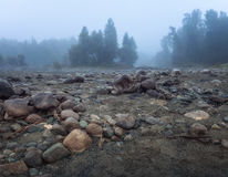 Misty Morning With Rocky Ground su priorità alta e sul sempreverde Forest Altai Mountains Highland Nature Autumn Landscape Fotografia Stock Libera da Diritti