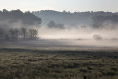 Misty morning, rural Ohio. Woods and pasture on foggy morning, rural Ohio stock images