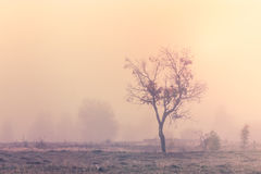 Misty morning scene with lonely tree. In Transylvania Royalty Free Stock Photography