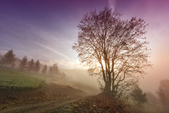 Misty morning scene with lonely tree Royalty Free Stock Image