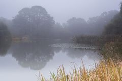 A misty morning on Southampton Common royalty free stock photos