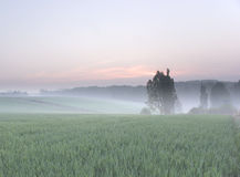 Misty morning in spring. Misty morning over the wheat fields in early spring stock photo