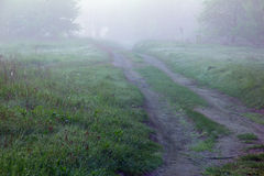 Misty morning in spring forest with a footpath and grass Stock Photos