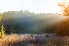 Misty morning with strong colorful sun beams in a forest in backlit scene. Misty morning with strong colorful sun beams in a forest backlit scene fog sunbeam stock images