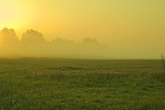 Misty morning in summer time. Foggy morning in the rising sun's rays Stock Photos