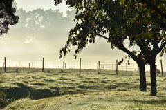 Misty morning. Misty sunny morning in beautiful Zuidoostbeemster Royalty Free Stock Photography