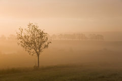 Misty morning sunrise Stock Photography