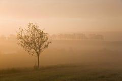 Misty morning sunrise Stock Photography