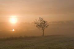 Misty morning sunrise Royalty Free Stock Photo