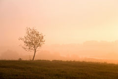 Misty morning sunrise Royalty Free Stock Photography