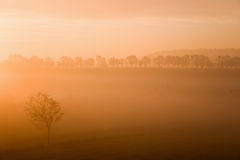 Misty morning sunrise Stock Images