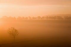 Misty morning sunrise Stock Images