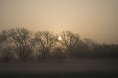 Misty Morning Sunrise Royalty-vrije Stock Foto