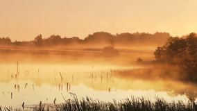 Misty morning sunrise. On the marsh stock video footage