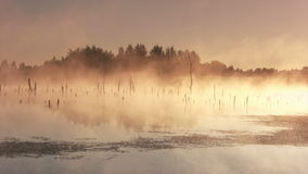 Misty morning sunrise. On the marsh stock footage