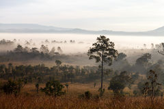 Misty morning sunrise in mountain Thung Salang Luang National Park Royalty Free Stock Photos