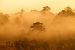 Misty morning sunrise in mountain Thung Salang Luang National Park Royalty Free Stock Photo