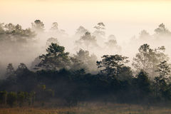 Misty morning sunrise in mountain Thung Salang Luang National Park Stock Photo