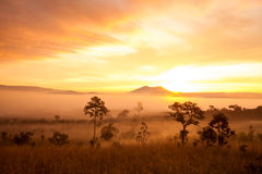 Misty morning sunrise in mountain at Thung Salang Luang National Stock Photos