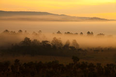 Misty morning sunrise in mountain at Thung Salang Luang National Stock Photography