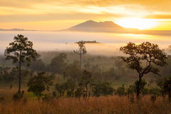 Misty morning sunrise in mountain at Thung Salang Luang National Royalty Free Stock Image