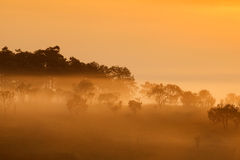 Misty morning sunrise in mountain at Thung Salang Luang National Stock Photo