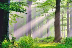 Misty Morning Sunrise. On a nature path in the woods Royalty Free Stock Image
