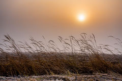 Misty morning sunrise over grass Royalty Free Stock Photo
